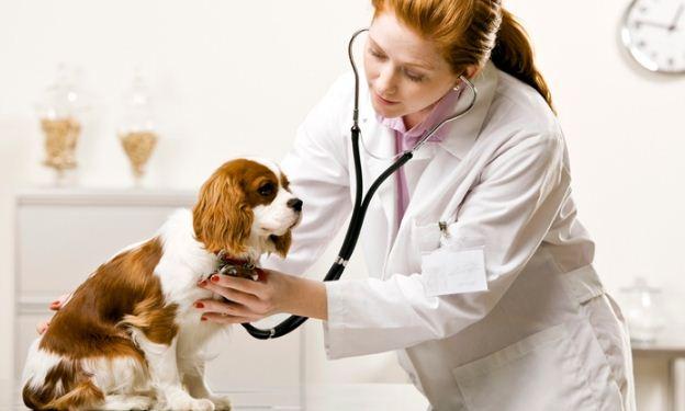 Banfield Pet Hospital Customer Opinion Survey